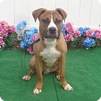 Adopt A Pet :: PHAROAH - Marietta, GA