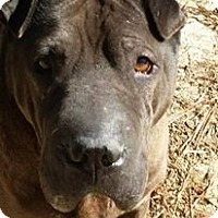 Adopt A Pet :: Mr Bojangles in NC - Mira Loma, CA