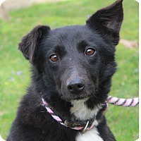 Adopt A Pet :: BILLIE JEAN/Low fees, spayed - Red Bluff, CA