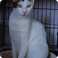 Adopt A Pet :: Hart - New Port Richey, FL