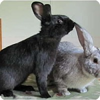 Adopt A Pet :: Joe Black & Smokey - Williston, FL
