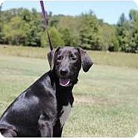 Adopt A Pet :: Carson - Brattleboro, VT