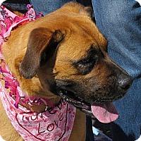 Adopt A Pet :: Stella - Scottsdale, AZ