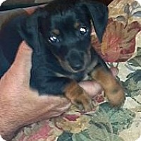 Adopt A Pet :: OTTI - Portland, OR