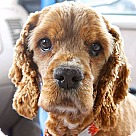 Adopt A Pet :: FOSTER HOMES NEE