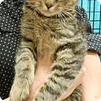 Adopt A Pet :: Mona - Reston, VA