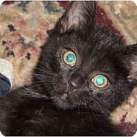 Adopt A Pet :: Emily - Riverside, RI