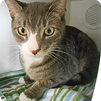 Adopt A Pet :: Slinky - Maywood, NJ