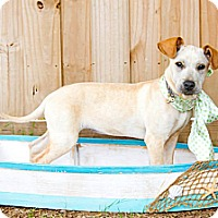 Adopt A Pet :: Kiki - Gadsden, AL