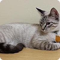 Adopt A Pet :: Finn - Edmond, OK