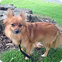 Adopt A Pet :: Tweet - Sinking Spring, PA