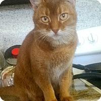 Adopt A Pet :: Neffie - Davis, CA
