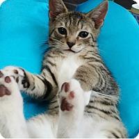 Adopt A Pet :: Micah - Speonk, NY