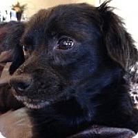 Adopt A Pet :: Val Dictorian - Houston, TX