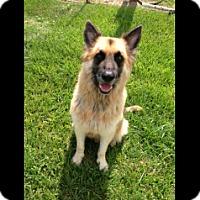 Adopt A Pet :: Polaris - Houston, TX