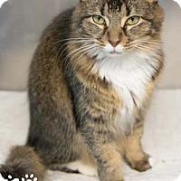 Adopt A Pet :: Flossie - Merrifield, VA
