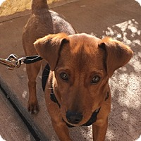 Adopt A Pet :: Misty - Las Vegas, NV