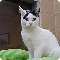 Adopt A Pet :: Willow - Chula Vista, CA