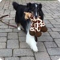 Adopt A Pet :: NILES - Dublin, OH