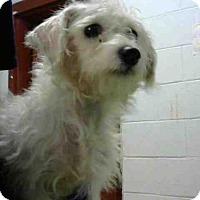 Adopt A Pet :: SANA - Atlanta, GA