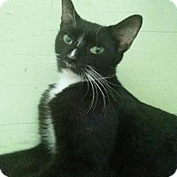Adopt A Pet :: Sandy - Bronx, NY