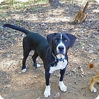 Adopt A Pet :: Janie - Kingston, TN