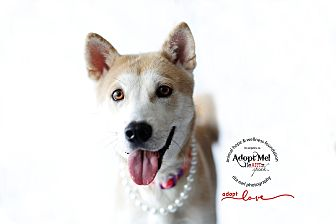 Jindo Mix Dog for adoption in Sherman Oaks, California - Mama