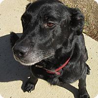 Adopt A Pet :: Marley - Glenwood, MN