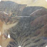 Adopt A Pet :: 319169 - Wildomar, CA