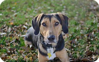 German Shepherd Dog/Hound (Unknown Type) Mix Dog for adoption in Salt Lake City, Utah - Exit