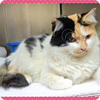 Adopt A Pet :: CARMEN - Marietta, GA