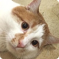 Adopt A Pet :: Shmoop - Lancaster, PA