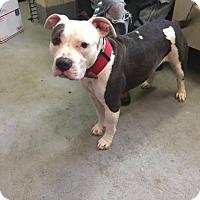 Adopt A Pet :: Laurel - Beckley, WV