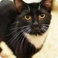 Adopt A Pet :: Liliana - Aiken, SC
