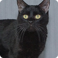 Adopt A Pet :: Karina - Elmwood Park, NJ