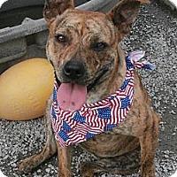 Adopt A Pet :: Tigger - Charlotte, NC