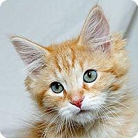 Adopt A Pet :: Ezekiel M - Sacramento, CA