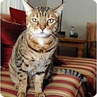 Adopt A Pet :: Triton - Farmingdale, NY