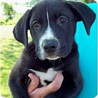 Adopt A Pet :: Bentley - courtesy post - Glastonbury, CT