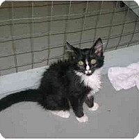 Adopt A Pet :: Oreo - Mission, BC
