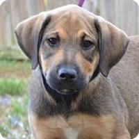 Adopt A Pet :: *John Boy - PENDING - Westport, CT