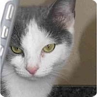 Adopt A Pet :: Margo*PENDING! - Xenia, OH