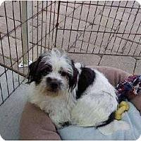 Adopt A Pet :: Daimen - Temecula, CA