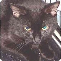 Adopt A Pet :: Howie - Summerville, SC