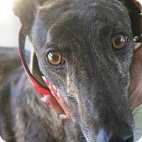 Adopt A Pet :: Buoy - Rancho Santa Margarita, CA