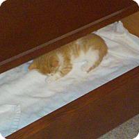 Adopt A Pet :: Faline - Fairborn, OH