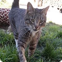 Adopt A Pet :: SAMMY - San Pablo, CA