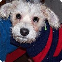 Adopt A Pet :: Hazel - Jacksonville, FL