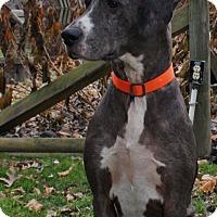 Adopt A Pet :: Sprocket - Baden, PA