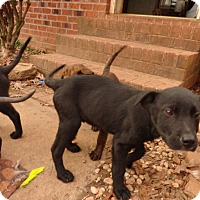 Adopt A Pet :: Sadie - Warrenton, NC